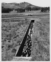 Herding cattle under the Westlake Overpass (ConejoThruTheLens) Tags: california cattle cows thousandoaks ranches westlakevillage thousandoakslibrary edlawrence unitedstateshighway101 conejothroughthelens albertsonranch