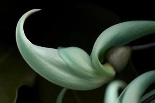 Jade Slipper