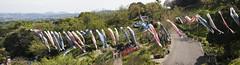 Kanazawa Zoo Playground Panoramic (rokclmb) Tags: fish playground japan panoramic koi kanagawa kanazawa windsock eriksen koinobori nobori kanazawazoo fishwindsock rokclmb jessederiksen jessederiksen