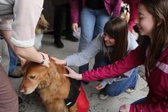 IMG_7375 (Macalester College) Tags: alumni studentlife dogdayafternoon macalestercollege spring2012