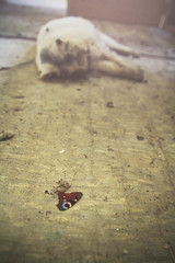 the butterfly, the cat (PonyHans / Castor) Tags: urban abandoned ex analog cat photoshop canon butterfly dead sad sweden wing sigma flies sverige exploration ue urbex 1755 60d