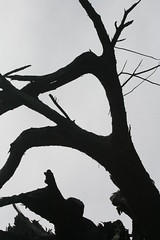 Abstract Tree (shaire productions) Tags: trees bw abstract tree art nature monochrome silhouette composition photography photo blackwhite branch natural image artistic branches shapes monotone monochromatic photograph form organic grayscale shape imagery shaireproductions