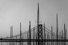 Bay Bridge Setting Sail (tobyharriman) Tags: pictures sf sanfrancisco bridge bw canon grey pier blackwhite baybridge photowalk sailboats tobyharriman drinkandclick drinkandclicksf
