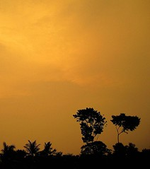 Orange Sky (A[A]A) Tags: sunset sky silhoutte westbengal indiatrees