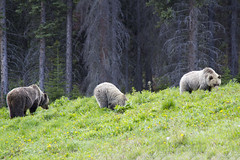IMG_3087 (simon_travelboy) Tags: canada transcanadahighway banffnationalpark morainelake