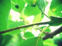 20120611_effected.jpg