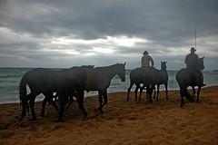 DSC_5812 chevaux sur la plage fréjus france (ichauvel) Tags: sea horses mer france men beach sand europe sable fréjus plage var hommes chevaux cavaliers