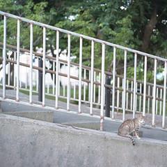 Cat of the Park (ari@098) Tags: park cat mediumformat kodak hasselblad naha ektachrome 120mm 80mm carlzeiss 66 reversalfilm planart