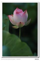 frame_BING7215 (Bing Lien) Tags: 004 20120712