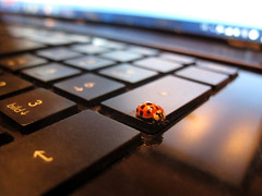 Computer Bug (Batikart) Tags: blue light shadow red summer white rot animal closeup digital canon bug computer germany notebook insect geotagged deutschland grey licht pc keyboard key energy europa europe sitting bokeh pov sommer laptop patterns energie perspective tastatur july grau tranquility screen indoors ladybug juli blau enter electronic insekt weiss muster dov nahaufnahme tier perspektive pun 2012 wordplay kfer marienkfer g11 glcksbringer luckycharm coleoptera fellbach badenwrttemberg swabian blickwinkel electronically 100faves wortspiel 200faves viewonblack 300faves batikart remsmurrkreis enterkey canonpowershotg11