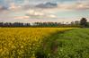 Una scia gialla