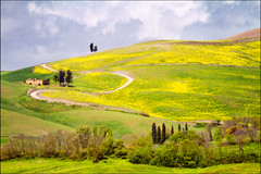 the yellow hills of tuscany (heavenuphere) Tags: road flowers trees 2 italy nature field yellow landscape outdoors italia country hill volterra growth tuscany curve toscana gi freshness mountainroad 55250mm