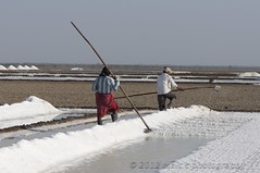 Salt Production, Little Rann of Kutch, Gujarat (Malc ) Tags: india photo workers photos indian working salt tribal gujarat pans harvesting saltpan kutch kachchh saltpans rann gujarati peopleworking saltworkers saltworker photosof rannofkutch indianworkers surendranagar wildass agariya saurashtra saltharvesting dhrangadhra halvad saltproduction littlerannofkutch dhrangadra malcc saltfarms wildasssanctuary malcolmchapman saltpanworker workingwithsalt agarias saltpansgujarat saltpansindia malcolmpchapman  saltingujarat workinginsaltpans saltpansinindia kutchsaltfarms kutchdesert