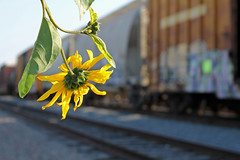 Nature and industry (KNOWLEDGE IS KING_) Tags: life railroad cold flower green art industry nature beauty field yard train bench grey graffiti leaf focus paint dof steel wildlife tracks railway socal bomb focused depth railfan freight selective kik benched