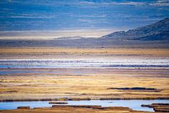 Fish Springs (fate atc) Tags: fishsprings usa utahdesert water desertspring pond remote saltgrass saltpan