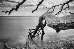 slow (hansekiki ) Tags: rgen jasmund nationalpark beach strand landschaften bigstopper longexposure langzeitbelichtung canon 5dmarkiii ostsee balticsea