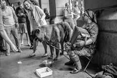 tortured for change$ (ChrisJWake) Tags: london dog street streetphotography portrait nikon d4s 35mm 35mmf14g
