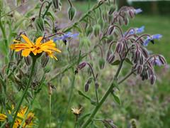 ckuchem-3084 (christine_kuchem) Tags: ackerrand bienenfreund bienenweide blumen blhstreifen feld felder klee landwirtschaft schmetterlingsbltler vogelschutz wiesenblume