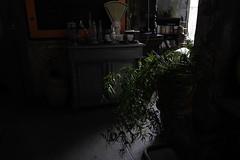 Plante (Sarah Devaux) Tags: plante balance pot vert orange lumire clairobscur verre plantes livres chelle meuble commode tableau ardoise bton bassin  flots bordeaux garage moderne