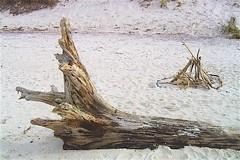 Baumstamm am Weststrand (Carl-Ernst Stahnke) Tags: prerow dars urwald ostsee treibholz baumstamm strand erholung muscheln feuersteine steine salzwasser weststrand