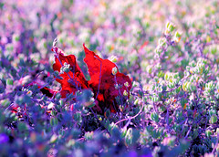 September Morning (Rob Goldstein -Thanks for your support) Tags: fineart autumn september color colorful canon california colors rob robertgoldstein raw red seasons artistic nature urbanart urbannature saturation sanfrancisco californa wordpress