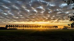 Shadows (Nederland in foto's) Tags: nederlandinfotos nederland netherlands nikon paulvandevelde pdvandevelde padagudaloma dordrecht biesbosch outdoorphotography outdoor natuurfotografie nature naturephotographer landscape landschapsfotografie landschap sky clouds sun sunrise