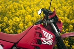 L1008461c (haru__q) Tags: leica m8 leitz summicron field mustard  honda crm250r motorcycle 2st