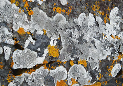 nature as a fine artist (lunaryuna) Tags: nature textures rock lichens colours naturalgrownart natureasartist natureabstract lunaryuna