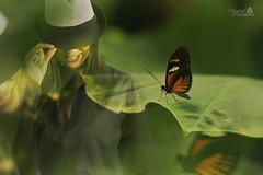 Madame Butterfly (Marcial Carretero) Tags: photoshop dobleexposicin mariposa butterfly woman mujer madame doubleexposure doubleexposistion green verde