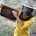 AG10 Rossi Marco A scuola di apicoltura 1