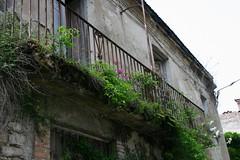 Balcone fiorito (Little Margie) Tags: campania case 1980 benevento rovine vicoli desolazione paese terremoto apicevecchia