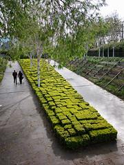 The Bitmap Garden (leroyo) Tags: paris lumix raw panasonic f25 14mm gf1 rpp jardincitron