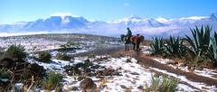 I102 Pony trek Snow Malealea valley.jpg