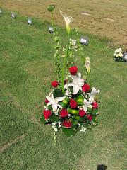 Ayla (juliealicea1947) Tags: puertorico flametree flamboyan nationalcemetery