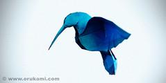 Origami Hummingbird (Himanshu (Mumbai, India)) Tags: india bird art modern paper origami hummingbird contemporary craft poland polska mumbai paperfolding folding modele łódź rzeźba himanshu polskie sztuka składanie nowoczesna papieru papierowe orukami himanshuagrawal himorigami himanshuorigami