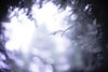 Colors of the Wind (moaan) Tags: life leica summer greenleaves green digital 50mm woods dof wind bokeh july f10 utata noctilux metasequoia 2012 m9 summerdream inlife rustlings songofthewind leicanoctilux50mmf10 leicam9