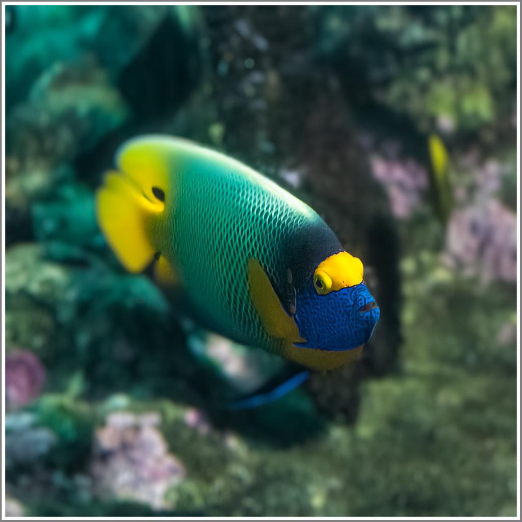 Pesci tropicali d acquario il mio acquario di acqua dolce for Sfondi pesci tropicali