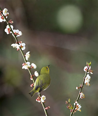 #792  (John&Fish) Tags: bird nature birds wow photography taiwan best 2012