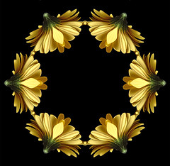 Gerbera Hoop (Kevin@Nugent) Tags: flowers nature yellow sony digitalart gerbera photoart gerber dsch1