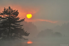 Morning at Beglika (.:: Maya ::.) Tags: morning mountain lake tree nature misty pine sunrise magic bulgaria moment rodopi   rhodope    beglika  mayaeye mayakarkalicheva