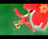 ❀ (3 н σ υ d ♥) Tags: red plant flower macro green yellow closeup leaf nikon blossom ورد ورده شجر أحمر أخضر طبيعه عهود 3houd ohoud