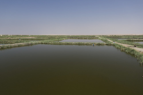 Large scale aquaculture farm, Faiyum, Egypt. Photo by Samuel Stacey, 2012.