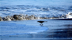 Buscando Caracoles (Roberto Segura) Tags: sun beach sunrise coast sand costarica waves wave playa finepix fujifilm hermosa carrillo guanacaste zanate sanate