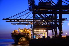 PSA Noordzee Terminal DST_6791 (larry_antwerp) Tags: psa terminal container dimitrisy zim msc mediterraneanshipping antwerp antwerpen       port        belgium belgi          schip ship vessel        schelde