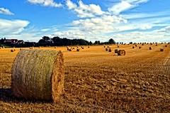 The harvest (Tobi_2008) Tags: ernte harvest heu hay feld field sommer summer landschaft landscape natur nature sachsen saxony deutschland germany allemagne germania