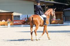 IMG_6928 (dreiwn) Tags: dressage dressur dressuur pferd reitturnier turnierreiten pferdesport horse horseback horseriding equestrian reitverein dressurprfung kandare doublebridle reiten pferde reitplatz ridingarena