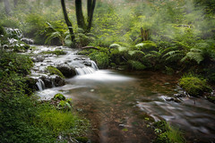 in the morning in the stream course (Goddl) Tags: morgens nebel bachlauf wald farn outdoor morning mist river forest fern