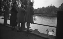 In the park on the bridge (Arne Kuilman) Tags: germany 6x9 mediumformat 1930s thirties europe blackandwhite photonotmine maxmller ldenscheid swan zwaan swans