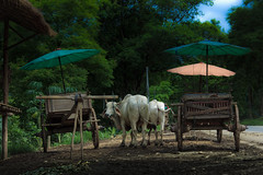 They will take you on tour (chonpinta) Tags: mountain landscape flickr thailand chiang mai photography wow 2016 massif explorer outdoor nature travel tourise netural blue green happy impress top10 buetiful foothill