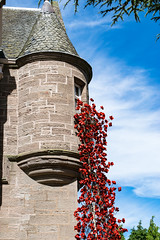 Poppies - Weeping Window (Cathy Lovell) Tags: poppy poppies weeping window black watch museum perth scotland ww1 remember rememberance stunning beautiful scotspirit brilliantmoments visitscotland tour
